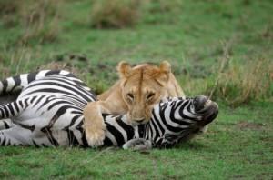 Omnívoros Defensores de los Animales (ODA)