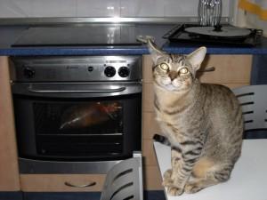 Leo esperando que acabe de hacerse el pollo.
